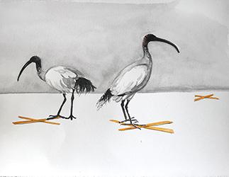 Social Distancing #9 - Birds do it