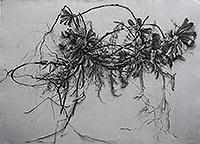 Bundanon Banksias