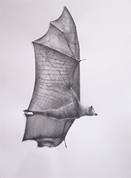 Melbourne's Flying Fox No. 2