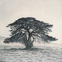 Memory Marker - Jack's Tree 1