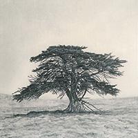 Memory Marker - Jack's Tree 2