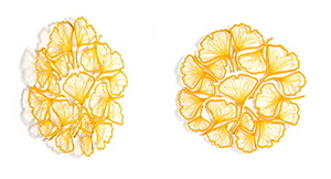Ginkgo Circle by Meredith Woolnough