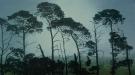 Fenceline Pines