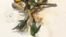 Gouldian Finches on Antlers and Branch
