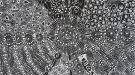 Desert Fringe-rush Seed Dreaming #4643/18