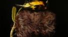 Siski Finch and Possum Banksia