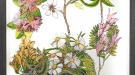 Ann Ryan, The Floral Souvenir