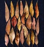 Tapestry 1