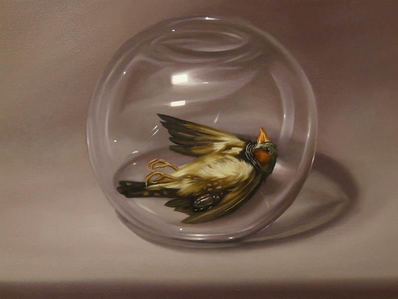 Zebra Finch and Beetle Under Glass